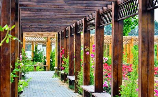 中国常见的防腐木有两种主要类型:俄罗斯樟子松和北欧赤松。
